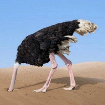 avestruz vergonha youtube