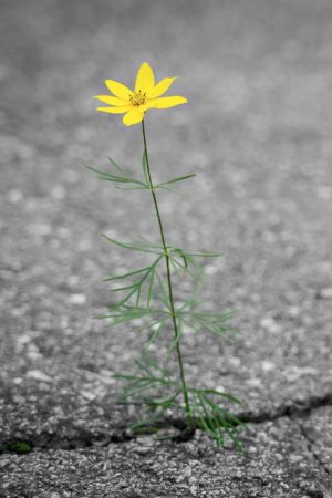 flower-4346049_1920